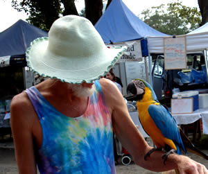 The Buzz Of The Mullumbimby Farmers Market